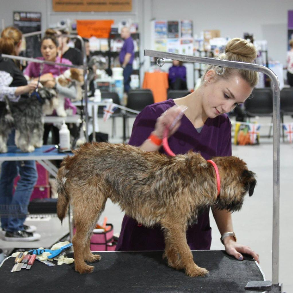 British Dog Grooming Championships