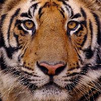 Andy Parkinson – Wildlife Photographer – An Illustrated talk