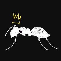 Ants NYE