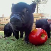The June Apples + Invincible Pigs @ St. James Wine Vaults