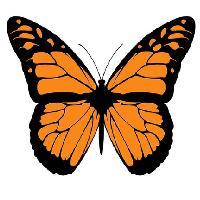 July Big Butterfly Club