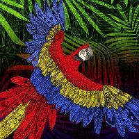 Audio Farm Presents: The Scarlet Macaw