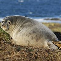 Café Science Dundee: How is Pollution affecting Scottish Seals?