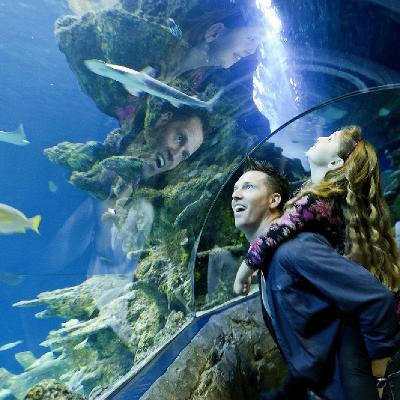 Six Spectacular Reasons To Visit Sea Life London This Summer Sea
