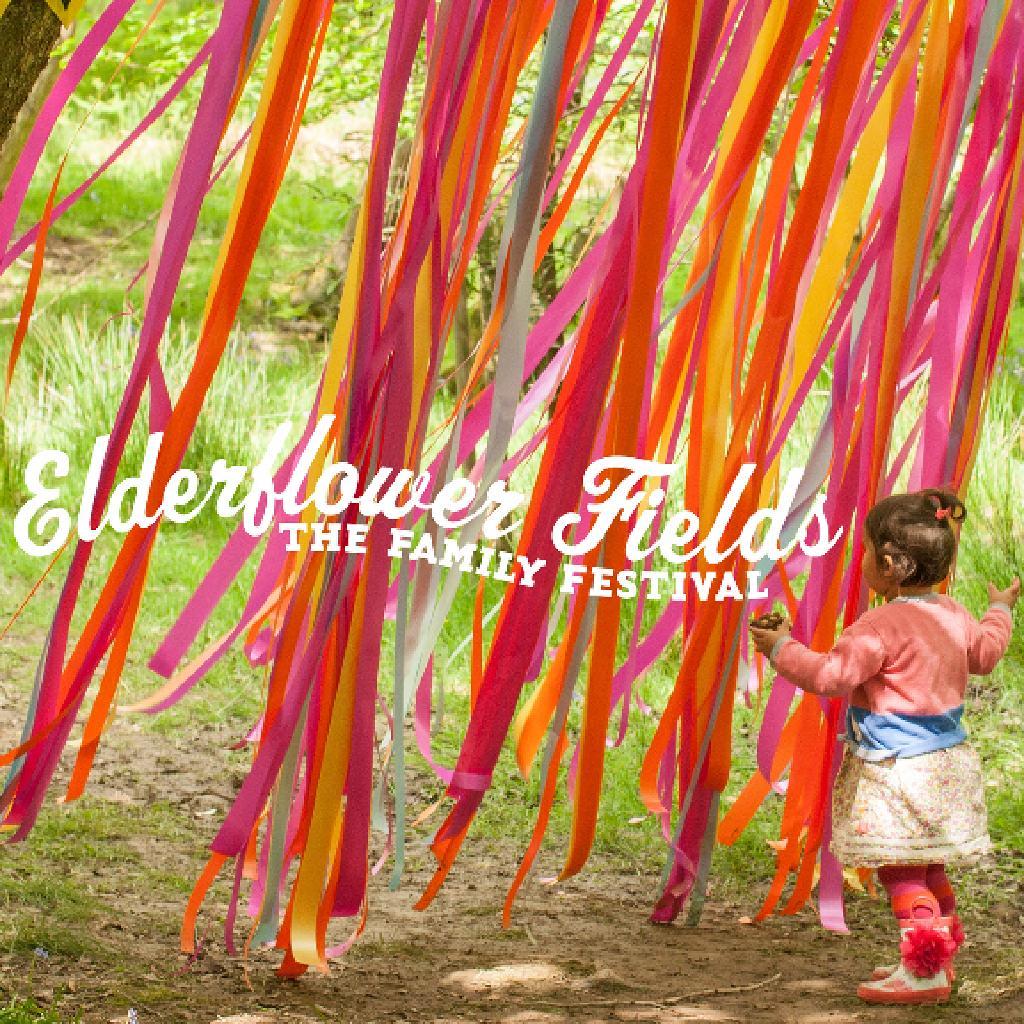 Elderflower Fields - Ashdown Forest