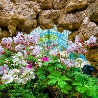 8216;Bring a Picnic' Bank Holiday Garden Tours