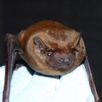 Bat talk/walk