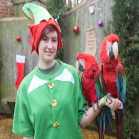 Santa, Elves and Sleigh Bells