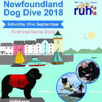Newfoundland Dog Dive
