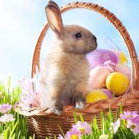 Family Easter Party & Easter Egg Hunt