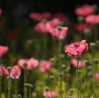 REBALANCE WITH NATURE' RETREAT