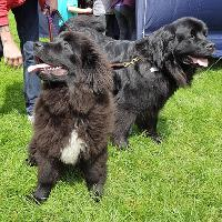 K9 Party In The Park 2019