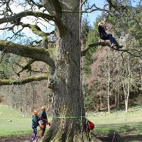 Tree climbing at Bowhill