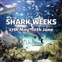 Shark Weeks