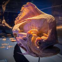 Sea Creatures: Life Beneath The Ocean