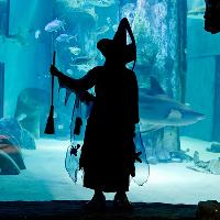 Brave the mysteries of the deep this Halloween at the Ascarium