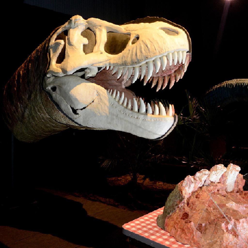 Dino Jaws