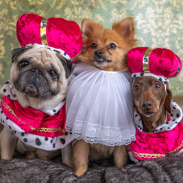 Dogstagram: UK's first ever photo station for dogs