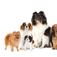 JCDR Annual Fun Dog Show