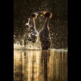 British Wildlife Photography Awards Retrospective Exhibition