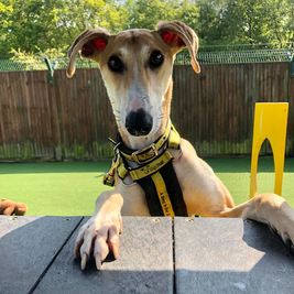 Summer Fun for Families at Dogs Trust!