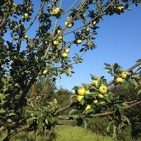Fruit Tree Pruning Workshop