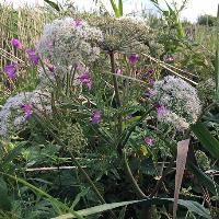 Tring Hertfordshire Wild Food Foraging Walk