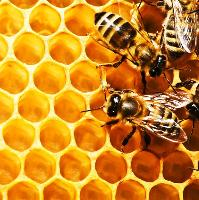 Lancashire Honey Show