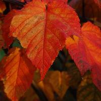 Workshop: Autumn & Winter Planting