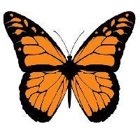 Big Butterfly Club