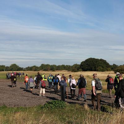 Taster session: Autumn identification of trees and plants