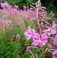 Bedfordshire Wild Food Foraging Walk