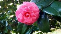 Botanical Art Course
