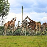 Woburn Safari Park to host Tusk Charity Weekend