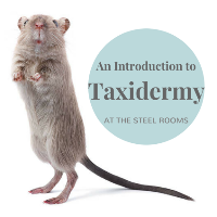 An Introduction to Taxidermy