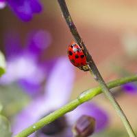 The Swiss Garden's Summer Bug Hunt