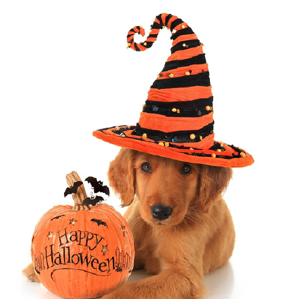 doggy date night halloween special tickets | 19 cafe bar manchester