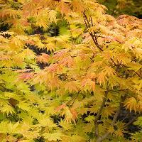 Mid-Autumn Celebration