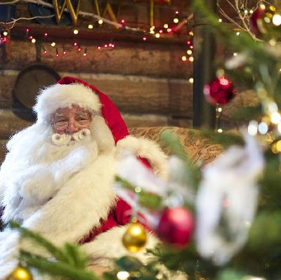 meet santa and take a husky sleigh ride wwt london wetland centre barnes