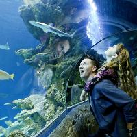Six spectacular reasons to visit SEA LIFE London this summer…