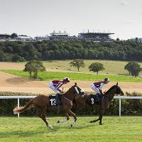 Midweek Racing at Goodwood Racecourse