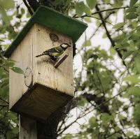 Build a Bird Box Day